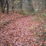 Chestnut path
