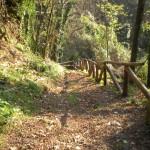 Path rails