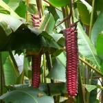 Freaky plants